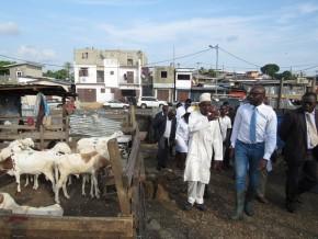 production-du-bétail-de-nouvelles-normes-en-gestation-au-gabon