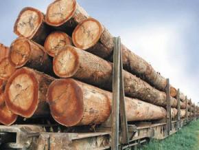 la-banque-mondiale-fait-le-bilan-de-la-filière-bois-au-gabon-six-ans-après-l'interdiction-d'exportation-des-grumes