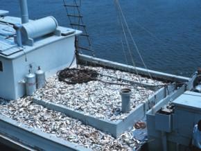 la-fao-et-le-gabon-signent-un-accord-pour-une-gestion-durable-de-la-pêche