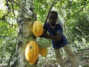 la-caistab-lance-la-phase-2-du-programme--jeune-entrepreneur--du-cacao-et-du-café