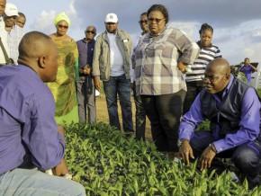 le-gouvernement-veut-générer-600-milliards-de-fcfa-et-équilibrer-sa-balance-financière-grâce-à-l'agriculture