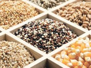le-gouvernement-et-la-fao-planchent-sur-le-développement-du-système-semencier