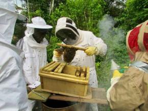 l'association-program-récolte-ses-premières-productions-de-miel
