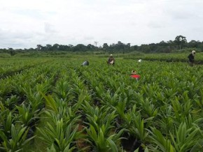 la-cea-table-sur-une-croissance-soutenue-en-afrique-centrale