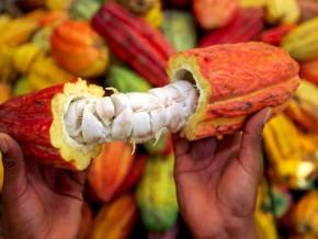 avec-le-projet-jecca-le-gabon-veut-produire-750-tonnes-de-cacao-et-de-café-sur-les-trois-prochaines-années