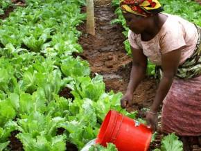 libreville-accueille-la-cinquième-édition-de-l'africa-agri-forum-en-décembre-2018