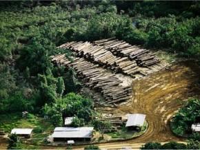gabon-conservation-justice-et-brainforest-approuvent-l'interpellation-des-exploitants-forestiers-chinois-à-makokou