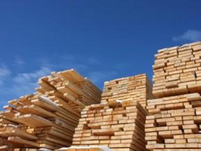exploitation-forestière-le-gabon-renoue-avec-les-négociations-sur-l'apv-flegt