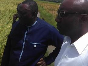 le-gabon-veut-conclure-un-accord-de-coopération-agricole-avec-le-bénin-pour-la-culture-du-riz