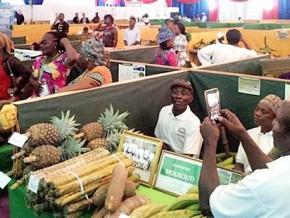 le-gabon-veut-faire-du-développement-agricole-l'un-des-grands-défis-du-septennat