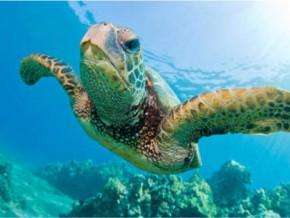 le-gabon-célèbre-la-journée-de-la-tortue-marine-ce-20-mai-2017