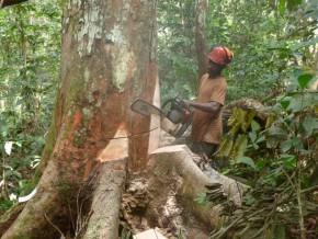 74-des-superficies-attribuées-à-l'exploitation-forestière-appartiennent-aux-sociétés-chinoises