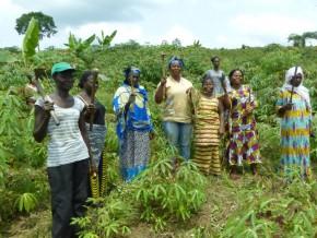 des-coopératives-agricoles-pour-le-développement-de-l'agriculture-au-gabon