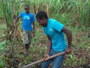 les-pays-de-lafrique-centrale-recensent-les-mesures-pour-booster-l'emploi-décent-des-jeunes-dans-l'agriculture