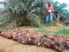 face-aux-revendications-de-meilleures-conditions-de-travail-l'agro-industriel-olam-gabon-se-défend