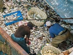 le-gabon-recherche-des-investisseurs-dans-la-filière-pêche-et-aquaculture-à-bilbao