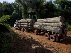 selon-interpol-l'exploitation-forestière-illégale-occasionne-des-pertes-de-150-milliards-fcfa-dans-les-pays-du-bassin-du-congo