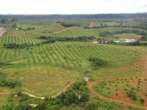 agro-industrie-ali-bongo-inaugure-l'huilerie-de-mboukou-dans-le-sud-du-gabon-le-9-mars