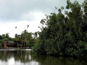 l'afd-soutient-la-préservation-et-la-gestion-intégrée-des-aires-protégées-de-la-région-de-libreville