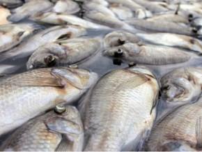 le-gouvernement-suspend-la-pêche-à-lambarene-dans-le-centre-du-gabon