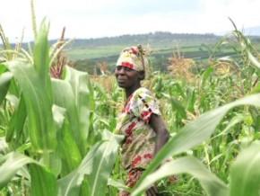 le-gouvernement-supprime-3-organismes-agricoles-au-profit-de-la-commission-nationale-de-la-fao