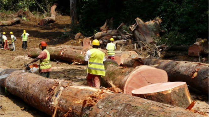 moins-d'exploitation-forestière-mais-plus-de-transformation-au-cours-des-trois-premiers-mois-de-l'année-2017
