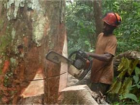 des-investisseurs-vietnamiens-intéressés-par-l'exploitation-forestière-et-l'exportation-de-riz-au-gabon