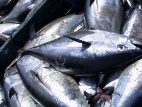 le-gabon-veut-résorber-son-déficit-en-produits-halieutiques-estimé-à-40--de-la-demande-nationale