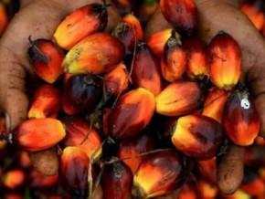 le-secteur-agricole-jouera-un-rôle-clé-dans-la-croissance-du-gabon-au-cours-des-prochaines-années