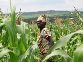 l'agriculture-pourrait-générer-150-000-postes-de-travail-d'ici-2023