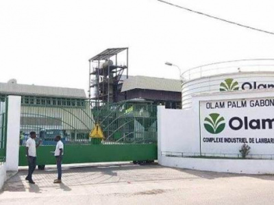 olam-palm-gabon-veut-se-lancer-dans-la-production-d-agrocarburants-de-graisses-et-de-margarine