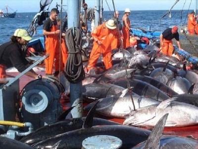 accords-de-peche-le-gabon-autorise-les-navires-europeens-a-pecher-dans-ses-eaux-32-000-tonnes-de-poisson-par-an