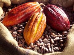 la-caistab-arrete-un-budget-de-16-7-milliards-de-fcfa-en-2021-pour-booster-la-production-de-cafe-cacao-au-gabon