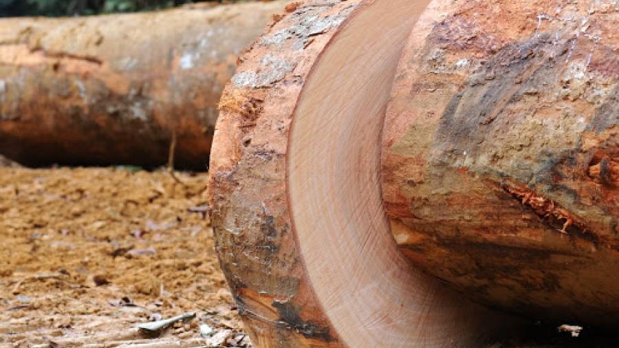 10-ans-apres-le-gabon-la-cemac-se-dirige-vers-une-interdiction-d-exportation-des-grumes