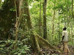 certification-le-gabon-renforce-le-suivi-de-l-exploitation-forestiere