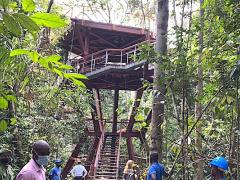une-salle-de-classe-construite-sur-un-arbre-pour-renforcer-le-tourisme-et-preserver-la-foret-gabonaise