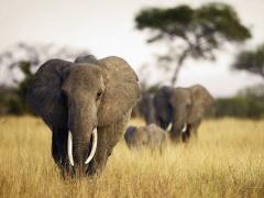 le-gabon-va-se-servir-de-l-adn-des-excrements-pour-realiser-son-1er-recensement-d-elephants-depuis-30-ans