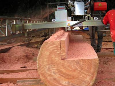 la-nouvelle-politique-forestiere-sera-soumise-au-gouvernement-dans-les-prochains-jours-pour-adoption