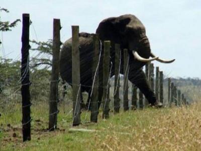 conflit-homme-faune-le-gabon-pourrait-bientot-autoriser-les-populations-a-se-defendre-en-cas-d-attaque-d-animaux-sauvages