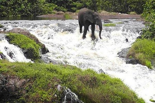 l-anpn-veut-mettre-en-place-un-cadre-de-developpement-d-ecotourisme-pour-valoriser-les-parcs-nationaux