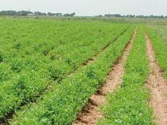 agriculture-le-gabon-exploite-deja-61-5-de-ses-terres-cultivables