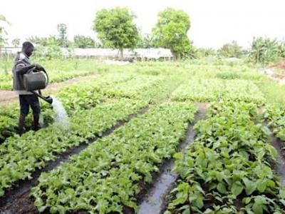 le-gabon-lance-une-campagne-d-immatriculation-des-agriculteurs-sur-le-territoire-national