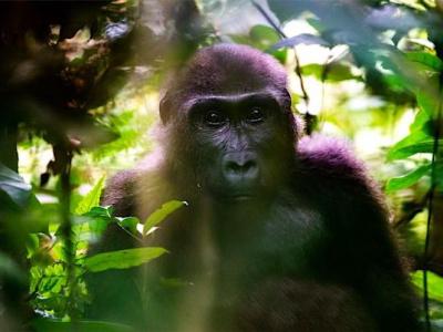 le-gabon-essaie-de-relancer-le-secteur-touristique-malgre-la-pandemie-du-coronavirus